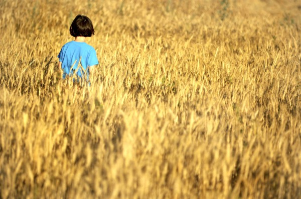 Israeli child-wheat field