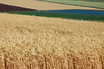 Israeli agriculture: God commanded Moses that the fields were to lay  fallow every seven years in Israel.