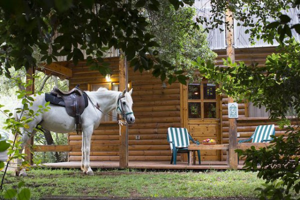 Horse-Cabin-Zimmers-Bed and Breakfast-Shabbat