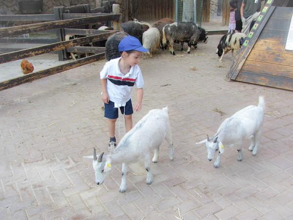 Petting Zoo-Jerusalem's Biblical Zoo