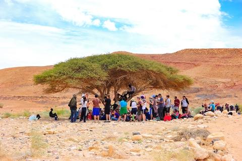 Acacia-refuge-desert