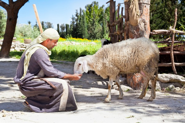 Shepherd-with-his-sheep