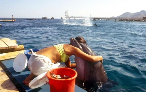 Dolphin-Reef-Eilat-Israel