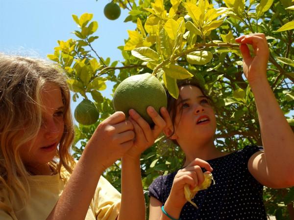 Israeli girls picks fruit