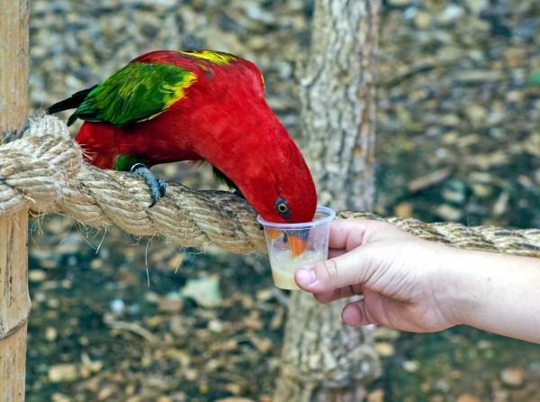 Israel, zoo, birds, animals