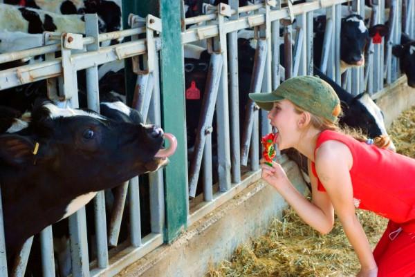 Cows-Farming-Israel-Dairy-Children