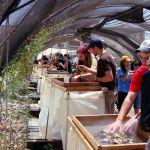 Temple Mount-debris-rubble-archaeology