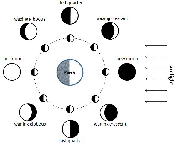 Moon phases (Diagram by Andonee)