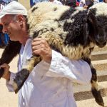 Pesach-Sheep-Samaritan