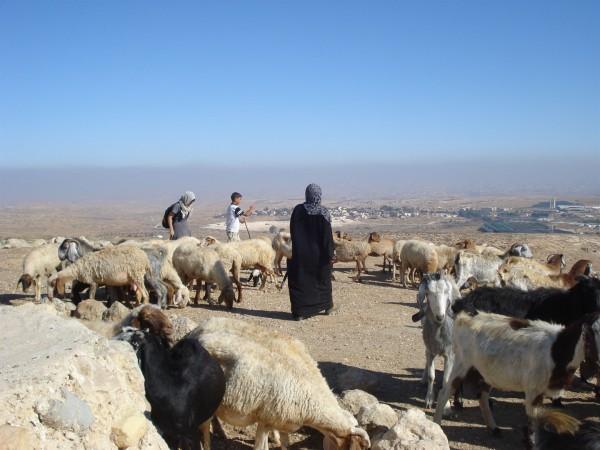 Israel-shepherd-flock